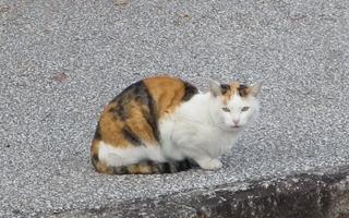 大泉緑地のネコ.jpg